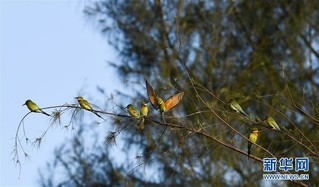 (环境)(4)蜂虎抵椰城