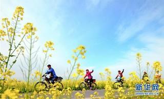 """(春季美丽生态)(3)四川:以""""花""""为媒 实现乡村振兴"""