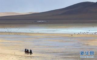 (环境)(2)内蒙古:巡护踏查  保护候鸟