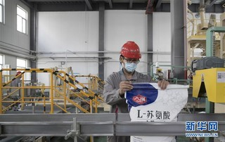 (经济)(3)黑龙江大庆:玉米深加工助力农民增收