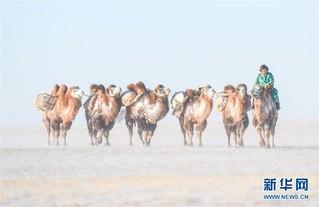 (社会)(2)冰雪草原上的骆驼文化节