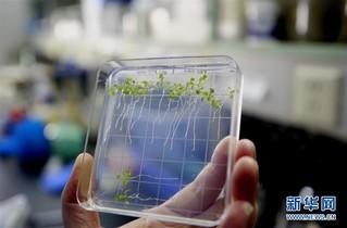 (图文互动)(1)在太空种粮种菜开花结果 我国首次在天宫二号完成植物生长全过程实验