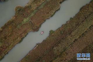 (美丽中国)(2)西溪湿地秋浓芦花白