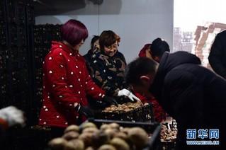 (走基层 听民声)(4)河南鲁山:香菇种植助农致富