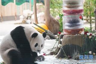 """(社会)(6)大熊猫思嘉的""""生日派对"""""""