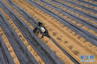 (经济)(2)四川布拖:发展高原蓝莓产业  壮大村集体经济