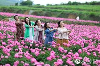 贵州玉屏芍药花开引客来