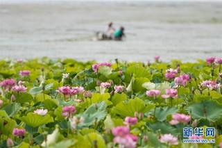 (环境)(5)云南大理洱海保护取得阶段性成效