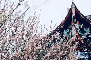 (春季美丽生态)(5)福州:古寺梅香