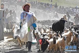 """(文化)(3)西藏""""数羊头""""传统活动"""