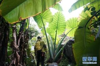 (科技)(2)跨国探险队在广西东兰发现大型天坑