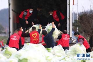#(聚焦疫情防控)(2)爱心蔬菜 捐赠湖北