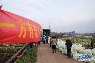 #(聚焦疫情防控)(1)爱心蔬菜 捐赠湖北