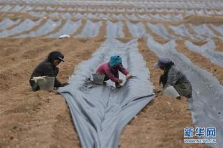 (经济)(4)四川布拖:发展高原蓝莓产业  壮大村集体经济