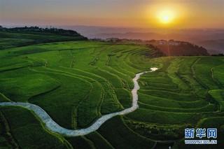 (新华视界)(4)贵州高坡夏日即景
