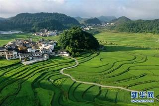 (新华视界)(2)贵州高坡夏日即景