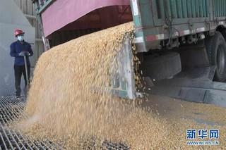 (经济)(1)黑龙江大庆:玉米深加工助力农民增收