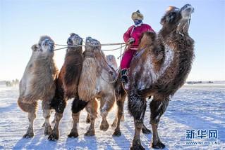 (社会)(6)冰雪草原上的骆驼文化节
