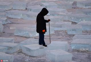 零下20度!沈阳采冰人低温里采冰一片繁忙