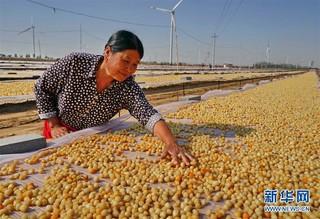 (经济)(1)河北昌黎:可持续扇贝养殖助环保渔业双赢