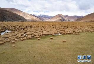 (2020珠峰高程测量)(2)珠峰山区纪行:山谷春来晚