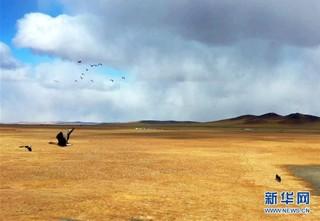 (环境)(1)内蒙古:巡护踏查  保护候鸟