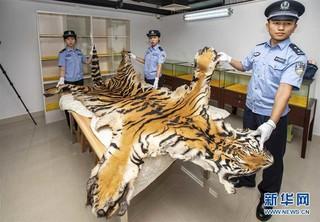 (图文互动)(2)拱北、南宁海关联合破获走私300余件濒危动物及其制品进境案