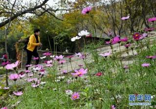 (在习近平新时代中国特色社会主义思想指引下——新时代新作为新篇章·图文互动)(9)为首都守护好绿水青山——北京更高质量保护生态涵养区调查