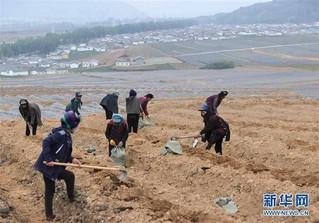 (经济)(3)四川布拖:发展高原蓝莓产业  壮大村集体经济