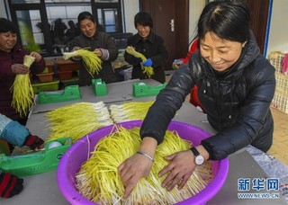 (经济)(2)河北深州:黄韭飘香致富路