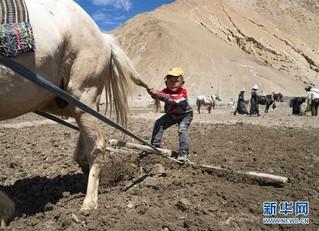 (2020珠峰高程测量)(7)珠峰山区纪行:山谷春来晚