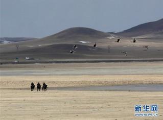 (环境)(4)内蒙古:巡护踏查  保护候鸟