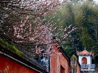 (春季美丽生态)(6)福州:古寺梅香