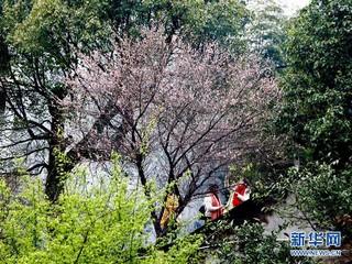 (春季美丽生态)(4)福州:古寺梅香