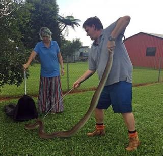 [惊悚实拍]4米巨蟒潜入民宅 将沙袋鼠整只吞下充分展示动物王国的残忍