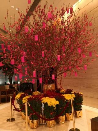 2月4日,酒店大堂摆放的发财树上挂满了红包.