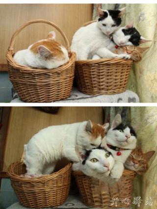 算了,咱们三个一起睡吧