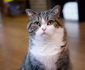 实力网红!9岁小猫夺Youtube人气冠军