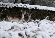 """欧洲降大雪 动物来""""撒欢"""""""