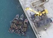 辽宁长海:海岛渔家收获忙