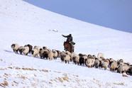 新疆牧民跨地区转场