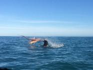 """罕见!新西兰海面上演章鱼海豹""""恶战"""""""