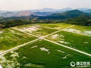 浙江长兴:淤泥填矿坑 复绿好备耕
