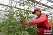 现代农业助力农民家门口就业