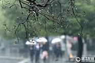 杭州:细雨绵长待天晴