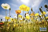 澳大利亚最大花展在堪培拉闭幕
