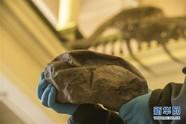 """科学家确认""""海洋霸主""""沧龙的蛋化石"""