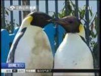 """春暖花开  企鹅出门""""踏青""""啦!"""