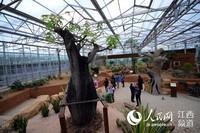 江西广丰现代农业示范区的热带植物园让人们感受浓浓的热带风情。