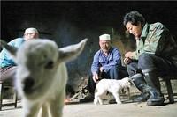 来自湖北省郧西县湖北口回族乡坎子山村的报告要闻